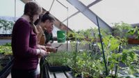 Students are working on their plants and being supervised by their teacher in the glasshouse.