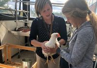 A teacher and a high school student gently holding a chicken