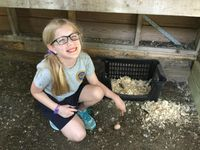A young girl working in a chicken coop, pointing to a freshly laid egg