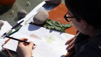 Student completing a science drawing assignment outside