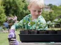 Boy wearing gardening gloves working with starter plants