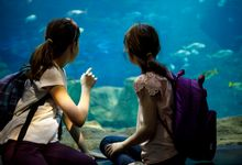 Two elementary school girls wearing backpacks, looking in a large tank at an aquarium