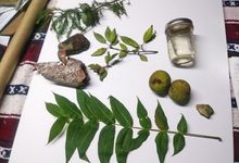 Items collected from nature for a science shoebox exchange