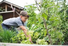 Elementary aged boy gardening outside