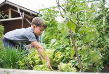 Elementary aged boy gardening outside