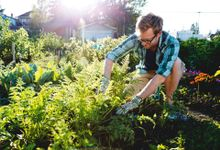 A blond, short-haired man is kneeling in a garden, gardening. It's sunny outside, and he's wearing glasses, a blue, plaid, button up shirt rolled up at the sleeves, and beige khaki shorts.
