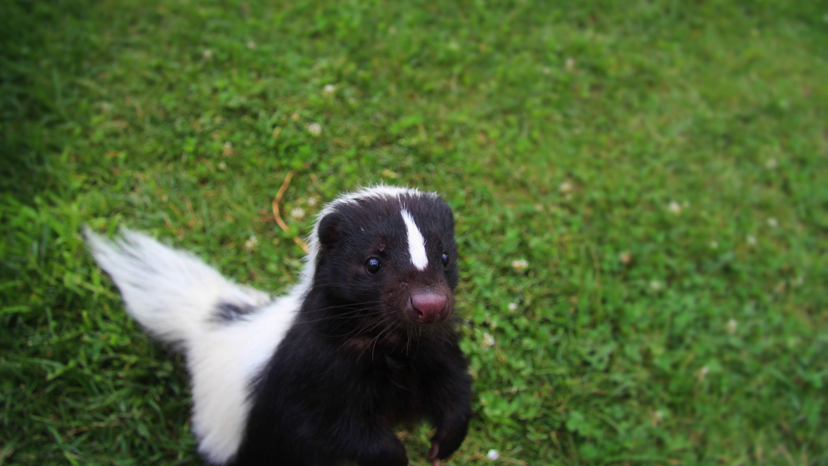 Grammar: The Skunk at the Garden Party