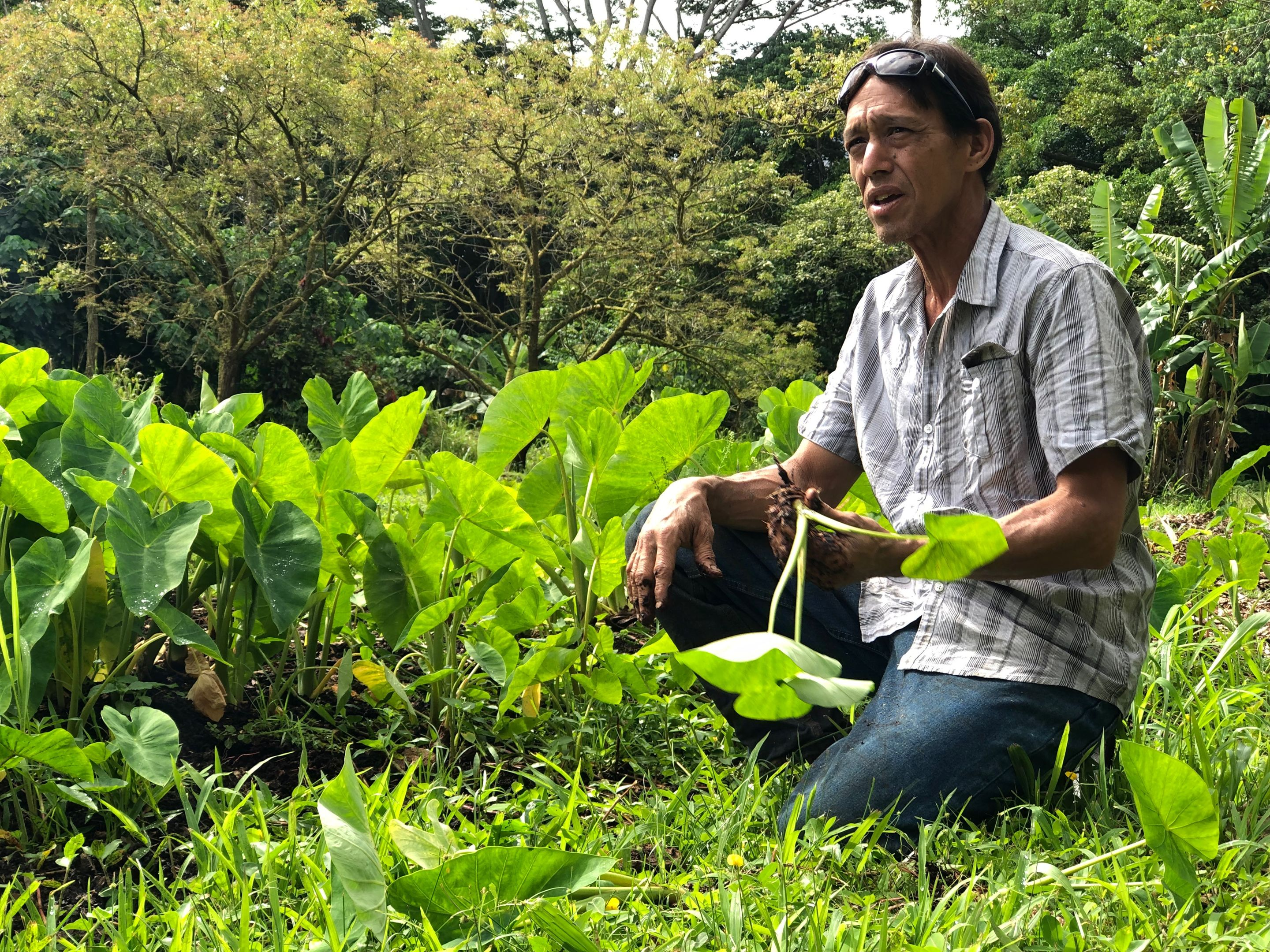 Mark Paikuli-Stride explains how students working in the loʻi learn about science, Hawaiian history, and connect with the environment.