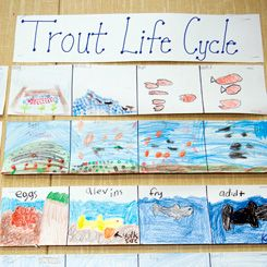 . . . studied the life cycle of trout and worked with the California Department of Fish and Game and a fly-fishing group to hatch and release trout into a nearby river.