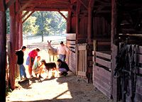 Ranch Hands:  Heifer Ranch, in Arkansas, teaches visitors how to milk a goat.