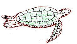 Learning While Drawing:  Seventh-grade students draw sea creatures based on realistic models.