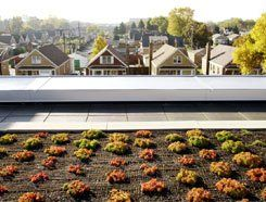 Top Soil: On the third-story roof of Tarkington Elementary School, in Chicago, a garden of drought-resistant plants serves as a teaching tool -- and provides energy-saving insulation.