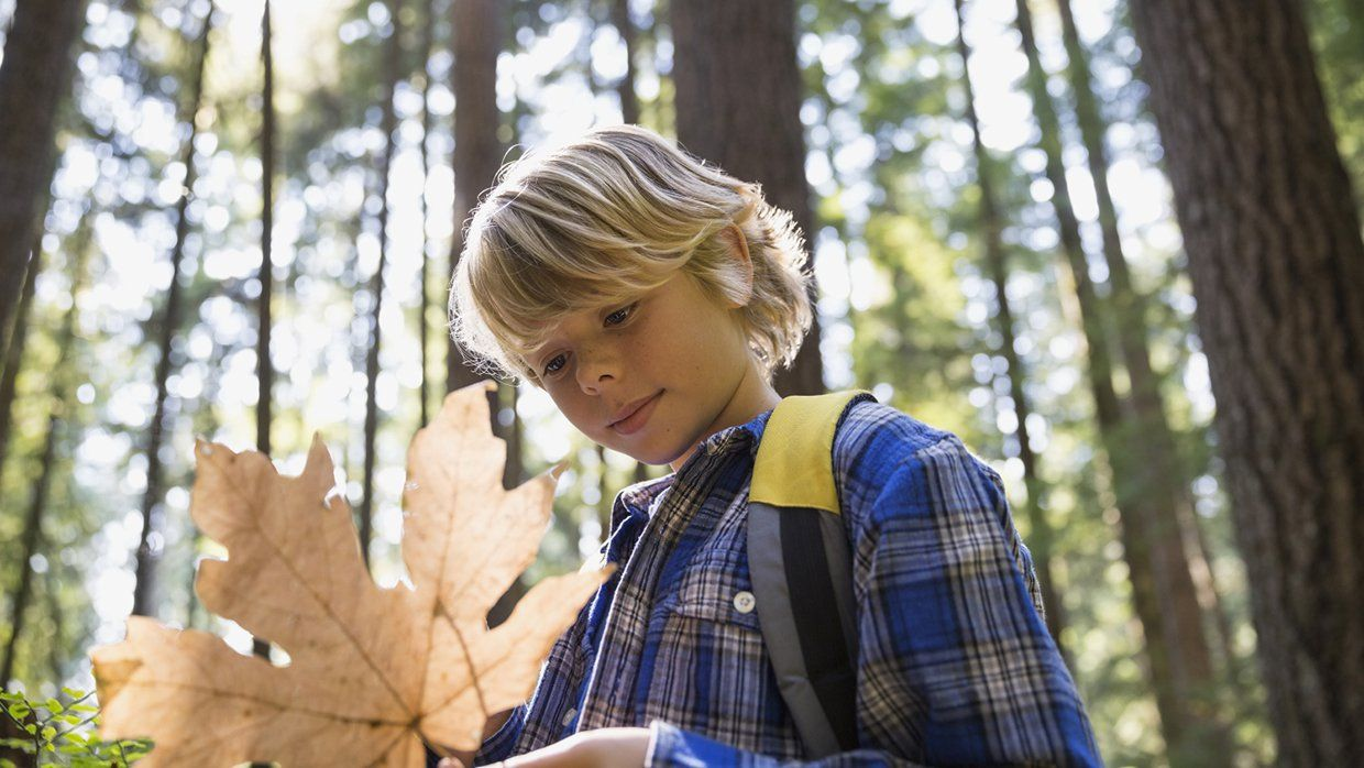 A young, blond boy in a blue, white, and black flannel button up shirt is standing outside, holding a big, dry, light brown leaf. Tall redwood trees are surrounding him on a sunny day.