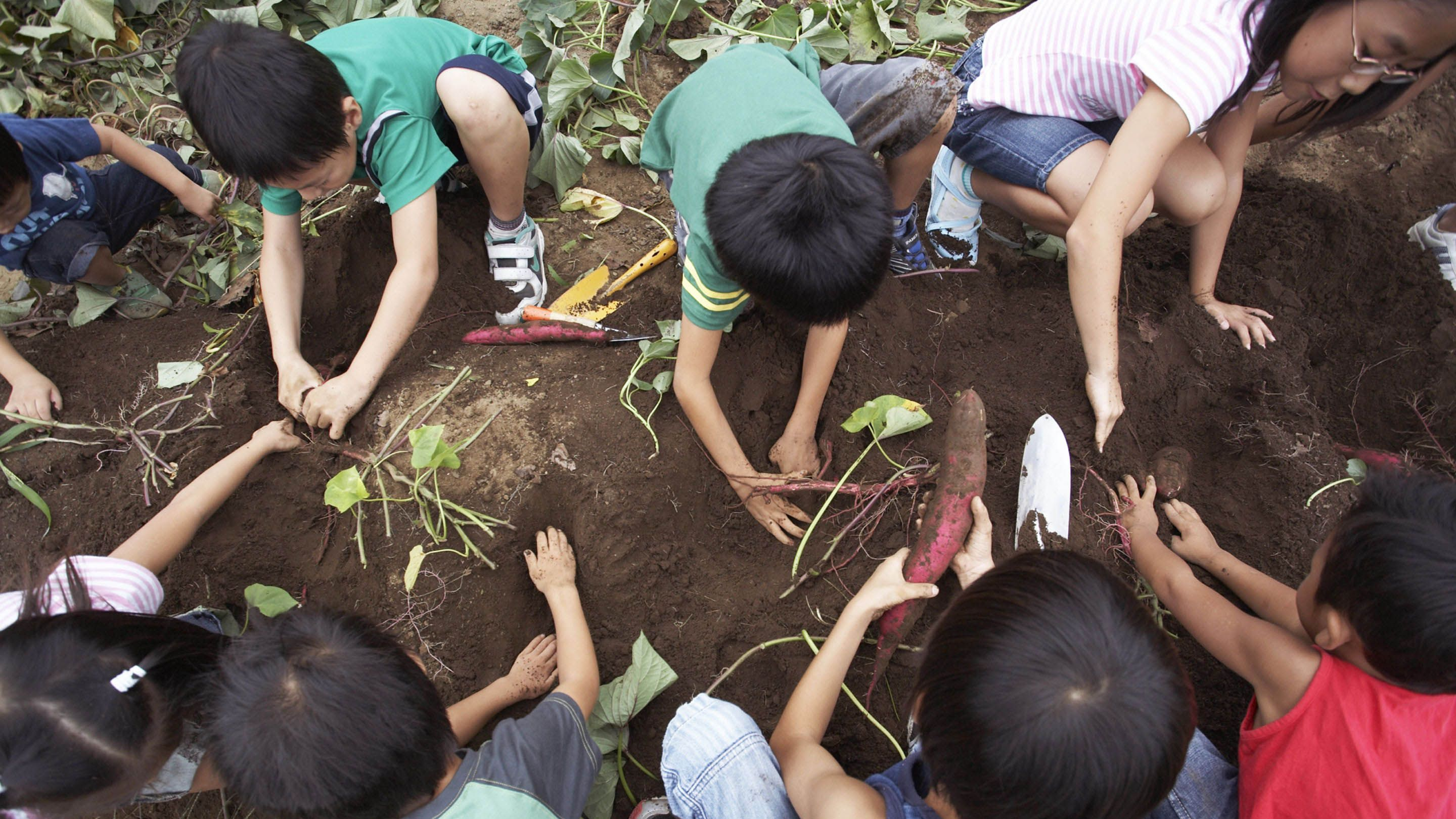 A picture of children planting vegetables in a garden.
