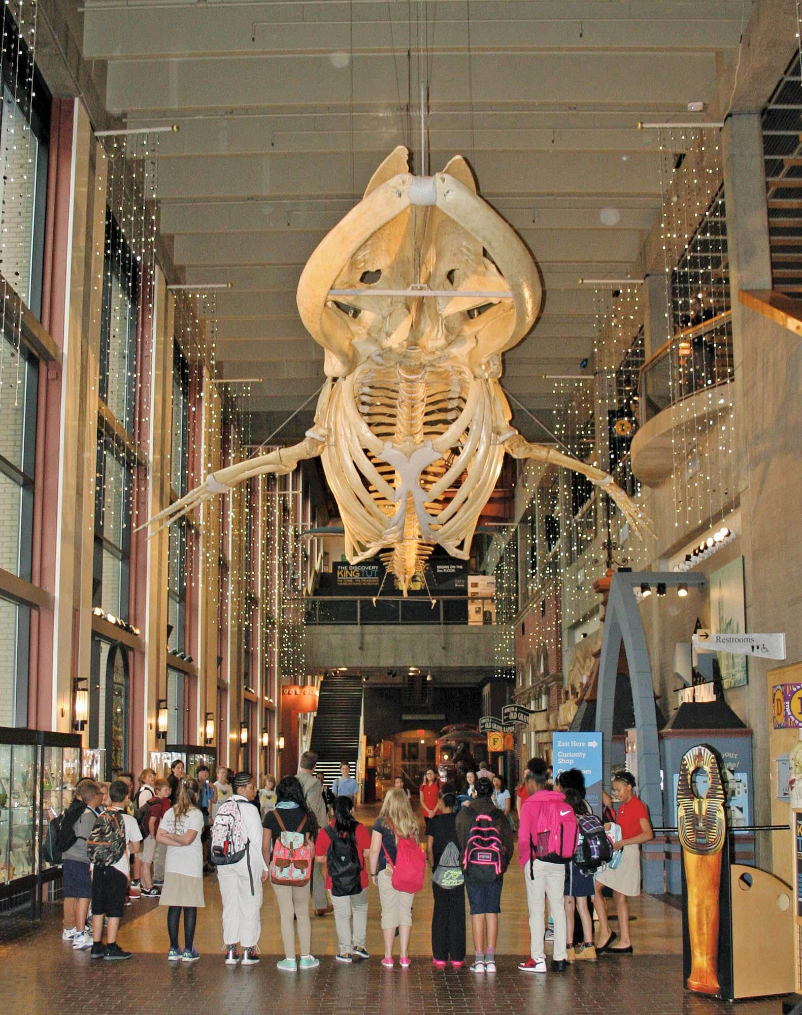 Students gather in the entrance under a fin whale skeleton, which the museum acquired in 1905. The growing school currently houses 120 sixth- and seventh-grade students.