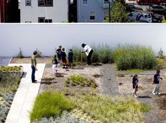 Garden of Eating: Project-based learning in the gym roof garden will help supply organic produce for school lunches.