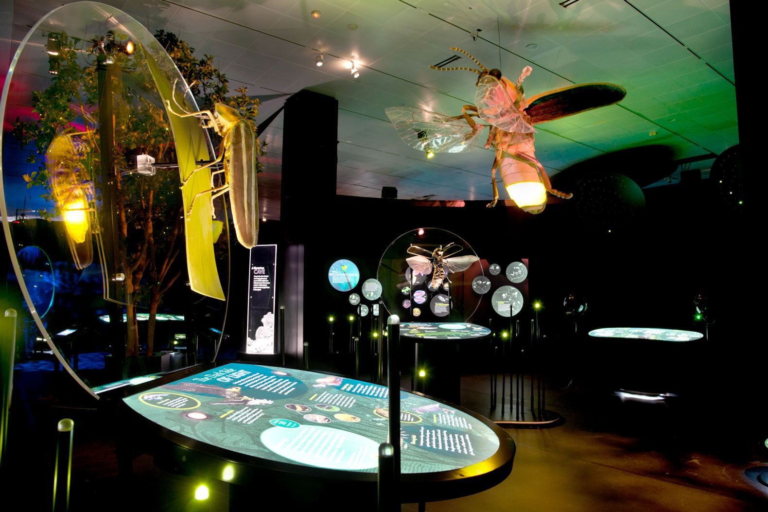 """The """"Creatures of Light"""" exhibit uses interactive displays to help students understand bioluminescence. The school employs a curriculum integration specialist who helps museum staff and teachers incorporate exhibits into classroom lessons."""