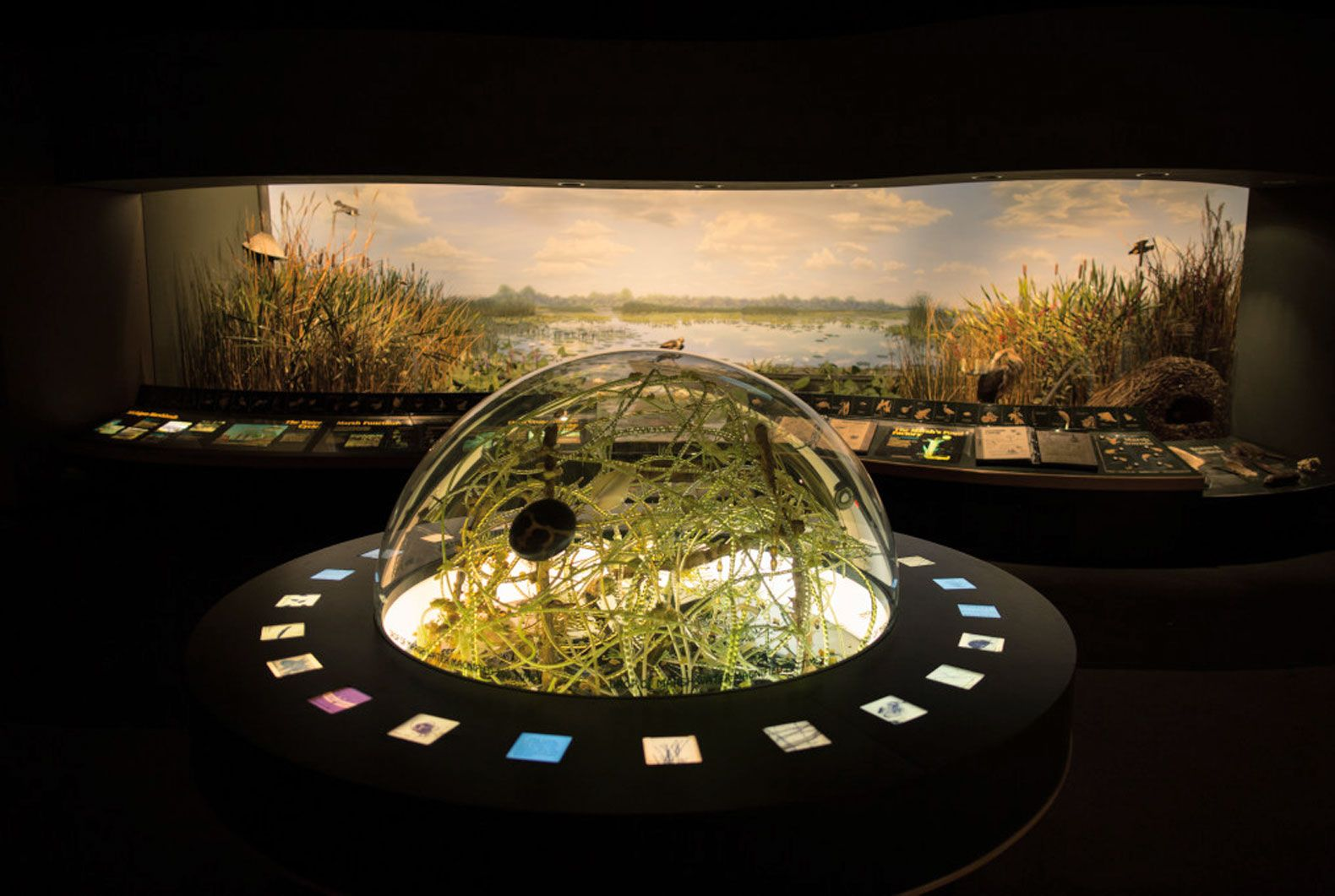 """The museum's """"Western Michigan Habitats"""" exhibit reinforces the school's place-based learning philosophy—displaying common ecosystems found in the region, such as the marshland pictured here."""