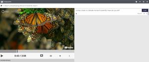 Screen grab of VideoANT