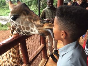 A giraffe licking the 12-year-old face of the author's son.