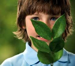 Taking It to the Class: Green Projects for the Classroom