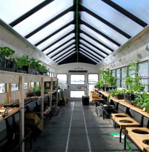 The inside of a bus turned into a greenhouse with bus seats removed and plant beds on both sides.
